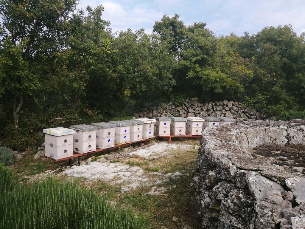 Pčelarska Udruga Bilogora Bjelovar Ova Web Stranica